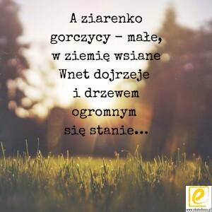 ziarno-gorczycy